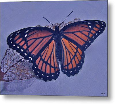 Butterfly Design Collection Metal Print by Debra     Vatalaro