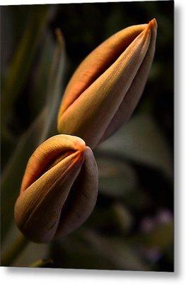 Tulips Metal Print by Odon Czintos