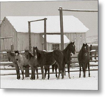 71 Ranch Metal Print by Diane Bohna