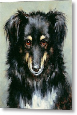 A Black And Tan Collie Metal Print by Robert Morley