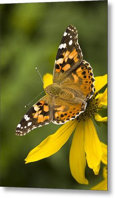 A Butterfly Sits Atop A Yellow Metal Print by Ralph Lee Hopkins