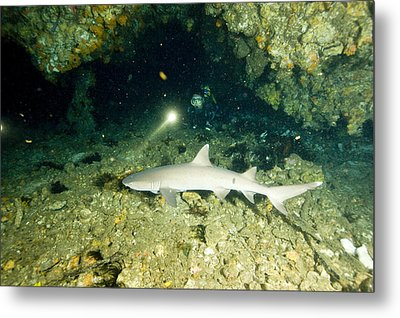 A Diver Exploring A Cavern Encounters Metal Print by Tim Laman