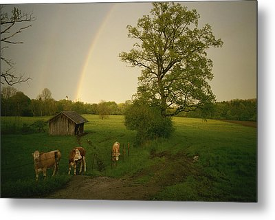 A Double Rainbow Arcs Over A Field Metal Print by Carsten Peter