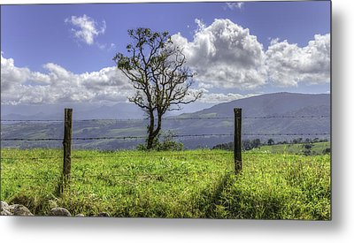 A Fence And A Tree 3552hdr Metal Print by Sortarivs Arts