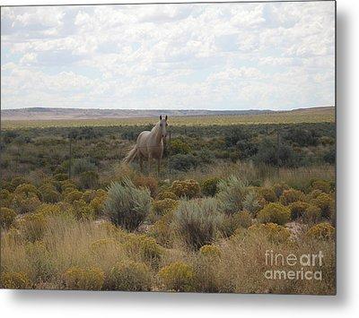 A Horse In The Desert Metal Print by Michaline  Bak
