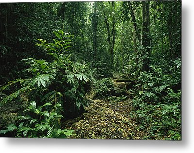A Lush Woodland View In Papua New Metal Print by Klaus Nigge