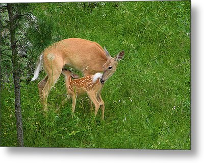 A Mother's Love - Doe And Fawn Metal Print by Christine Till