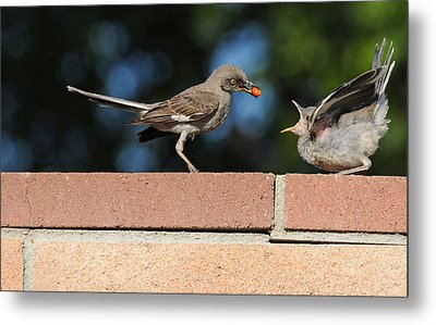 A Mothers Work Is Never Done Metal Print by Lynn Bauer