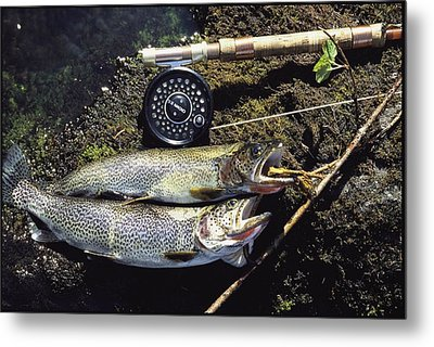 A Pair Of Cutthroat Trout, Salmo Metal Print by Bill Curtsinger