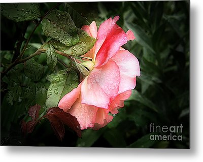 A Rose Is A Rose Metal Print by VIAINA Visual Artist