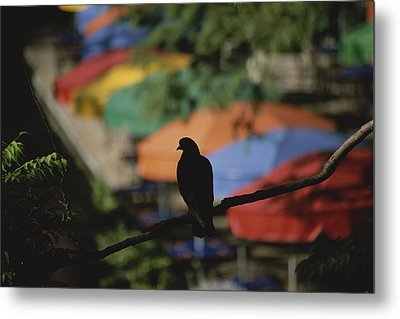 A Silhouetted Pigeon Surveys Metal Print by Stephen St. John