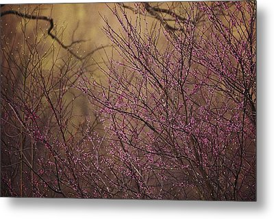 A View Of A Dew-covered Bush In Bloom Metal Print by Joel Sartore