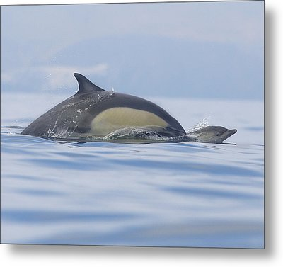 A Watchful Mother Metal Print by Steve Munch