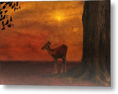 A Young Deer Metal Print by Tom York Images