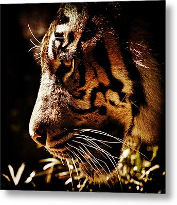 Absolute Focus Metal Print by Andrew Paranavitana