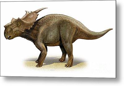Achelousaurus Horneri, A Prehistoric Metal Print by Sergey Krasovskiy