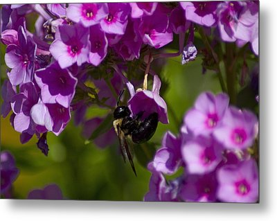 Acrobatic Bee Metal Print by Sven Brogren