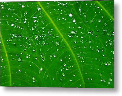 After The Rain Metal Print by Michael Krahl