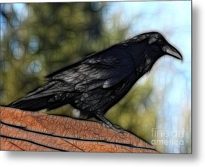 Alfred On The Roof Metal Print by Marjorie Imbeau
