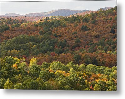 Algonquin In Autumn Metal Print by Cale Best