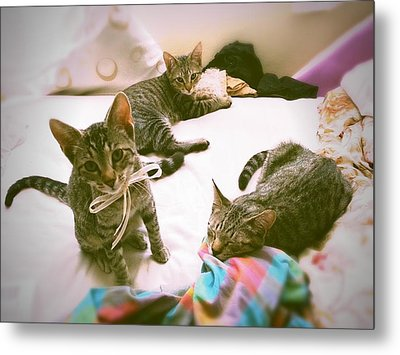 All 3 Kittens Together  Metal Print by Gemma Geluz