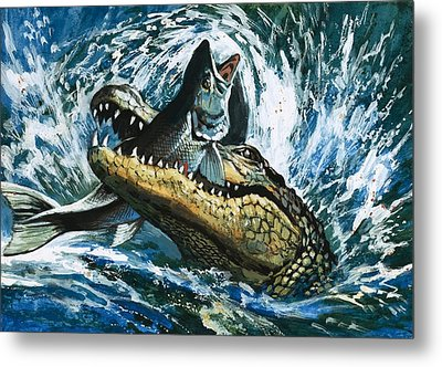 Alligator Eating Fish Metal Print by English School