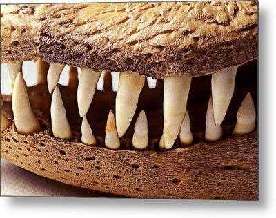 Alligator Skull Teeth Metal Print by Garry Gay