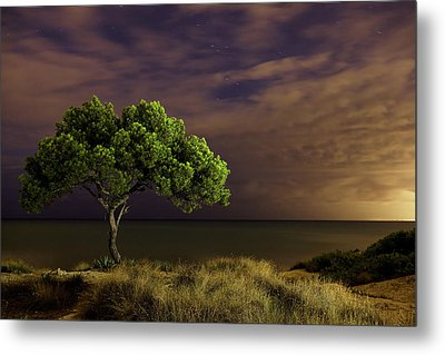 Alone Tree Metal Print by Alex Stoen Photography