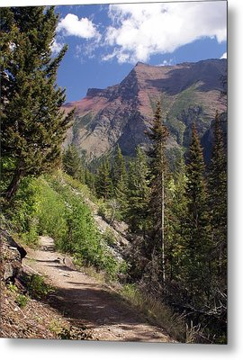 Along The Trail Metal Print by Marty Koch