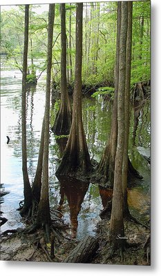 Along The Waccamaw Metal Print by Suzanne Gaff