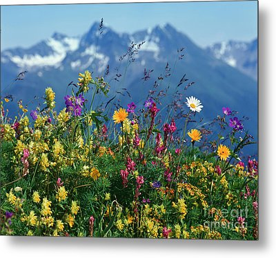 Alpine Wildflowers Metal Print by Hermann Eisenbeiss and Photo Researchers
