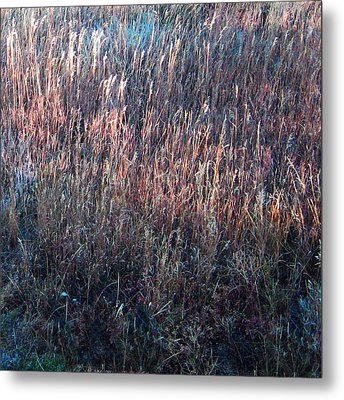 Amazing Grass Two Metal Print by Ric Soulen