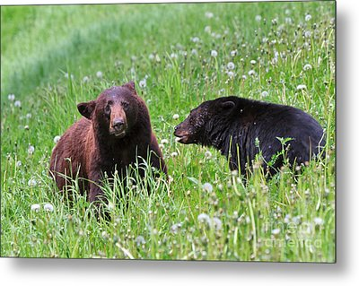 American Black Bear With Cub Metal Print by Louise Heusinkveld