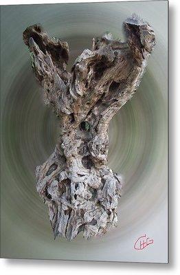 Ancient Old Olive Tree Metal Print by Colette V Hera  Guggenheim