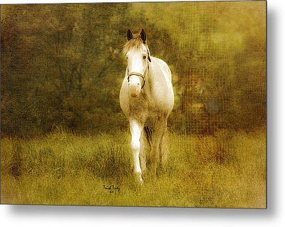 Andre On The Farm Metal Print by Trish Tritz