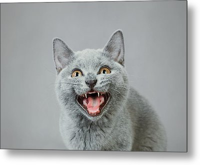 Angry Kitten Metal Print by Waldek Dabrowski