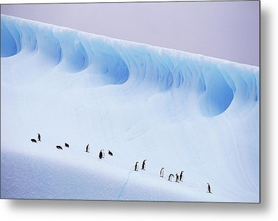 Antarctica, South Orkney Islands, Chinstrap Penguins On Iceberg Metal Print by Kevin Schafer