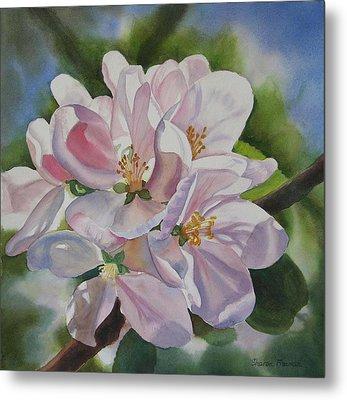 Apple Blossoms Metal Print by Sharon Freeman