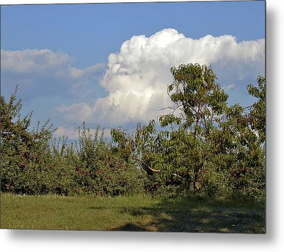 Apple Orchard Metal Print by Richard Gregurich