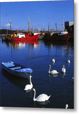 Ardglass, Co Down, Ireland Swans Near Metal Print by The Irish Image Collection