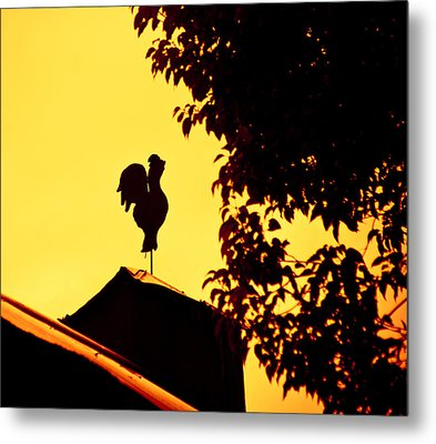 As A Rooster Crows Metal Print by Carolyn Marshall
