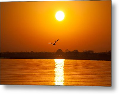 As The Seagull Heads Home Metal Print by Karol Livote