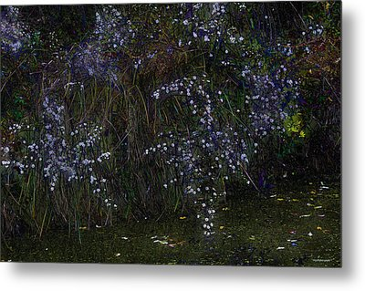 Aster Days Metal Print by Ron Jones