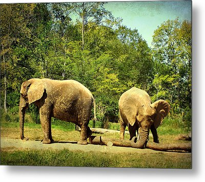 At Cross Purposes Metal Print by Lianne Schneider