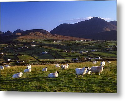Aughrim Hill, Mourne Mountains, County Metal Print by Gareth McCormack