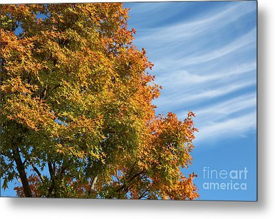 Autumn Anticipation Metal Print by Carol Groenen