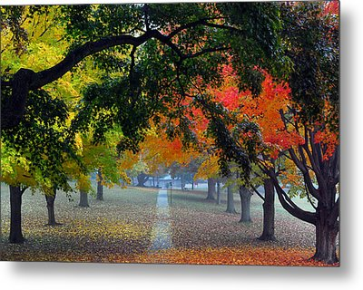 Autumn Canopy Metal Print by Lisa Phillips