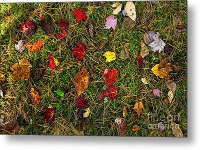 Autumn Forest Floor Metal Print by Matt Tilghman