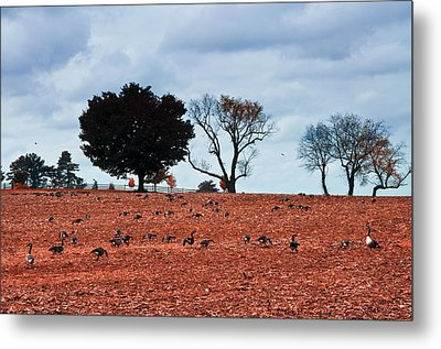 Autumn Geese Metal Print by Bill Cannon
