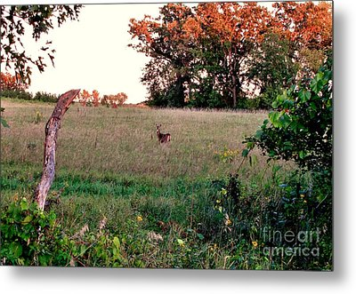 Autumn Hunt Metal Print by Marilyn Smith
